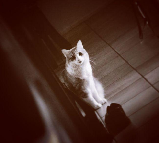 Cat Peeking Sepia Adorable