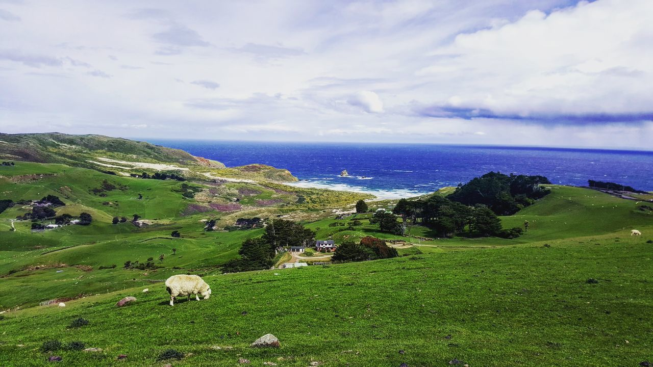 Rugged coastlines and a lone sheep make for great shots. Nature Beauty In Nature Sky Scenics Cloud - Sky Rural Scene Landscape Green Color Agriculture Environmental Conservation Tranquility Grass Outdoors Tranquil Scene No People Day Lush - Description Beach Beachphotography Rugged Beauty Rugged Coastline Loner Life Loner Sheep Sandfly Bay