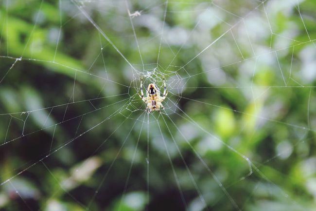 SastaFotu India Spider Hello World Bharat ☺ Animato