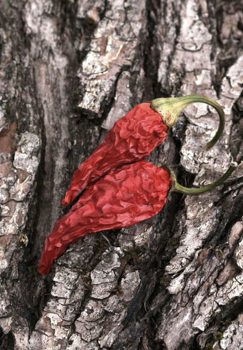 red hot chilli Chili  Chilli Chilli Pepper Close-up Day Dry Paprika Freshness Hot Nature No People Red Red Hot Chili Peppers Wood
