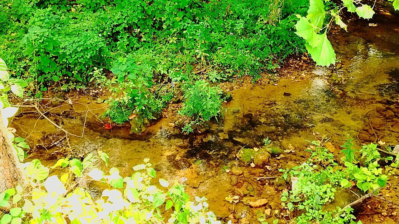 Standing Water Plant Algae River View River Creekside Trail Creek Creekside Growth Green Color Water High Angle View Nature Tranquility Reflection Messy Growing Day Outdoors Floating On Water Swamp Standing Water Beauty In Nature Algae Fragility