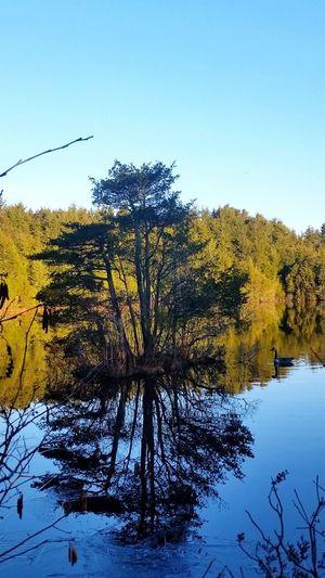 Goose Lake View Check This Out Hello World Beautiful Enjoying Life Trees Lakeside