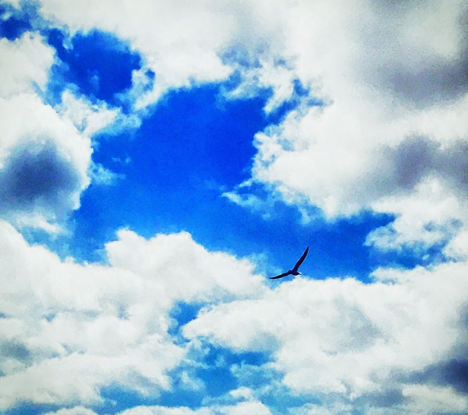 Seagulls and Signs Flying Sky Cloud - Sky Blue Mid-air Day Nature Outdoors No People Beauty In Nature Tranquil Scene Blue Sky Bird Seagull Long Goodbye