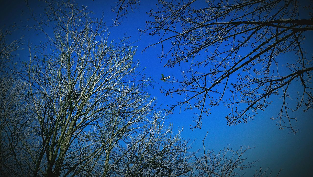 nature, beauty in nature, tree, low angle view, blue, branch, tranquility, no people, growth, outdoors, day, tranquil scene, scenics, clear sky, bare tree, sky