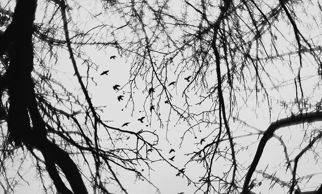 Black bird's, Take these broken wings and teach me to fly. Mobile Photography EyeEm Tadaa Community EyeEm Best Shots Nature Showcase: November
