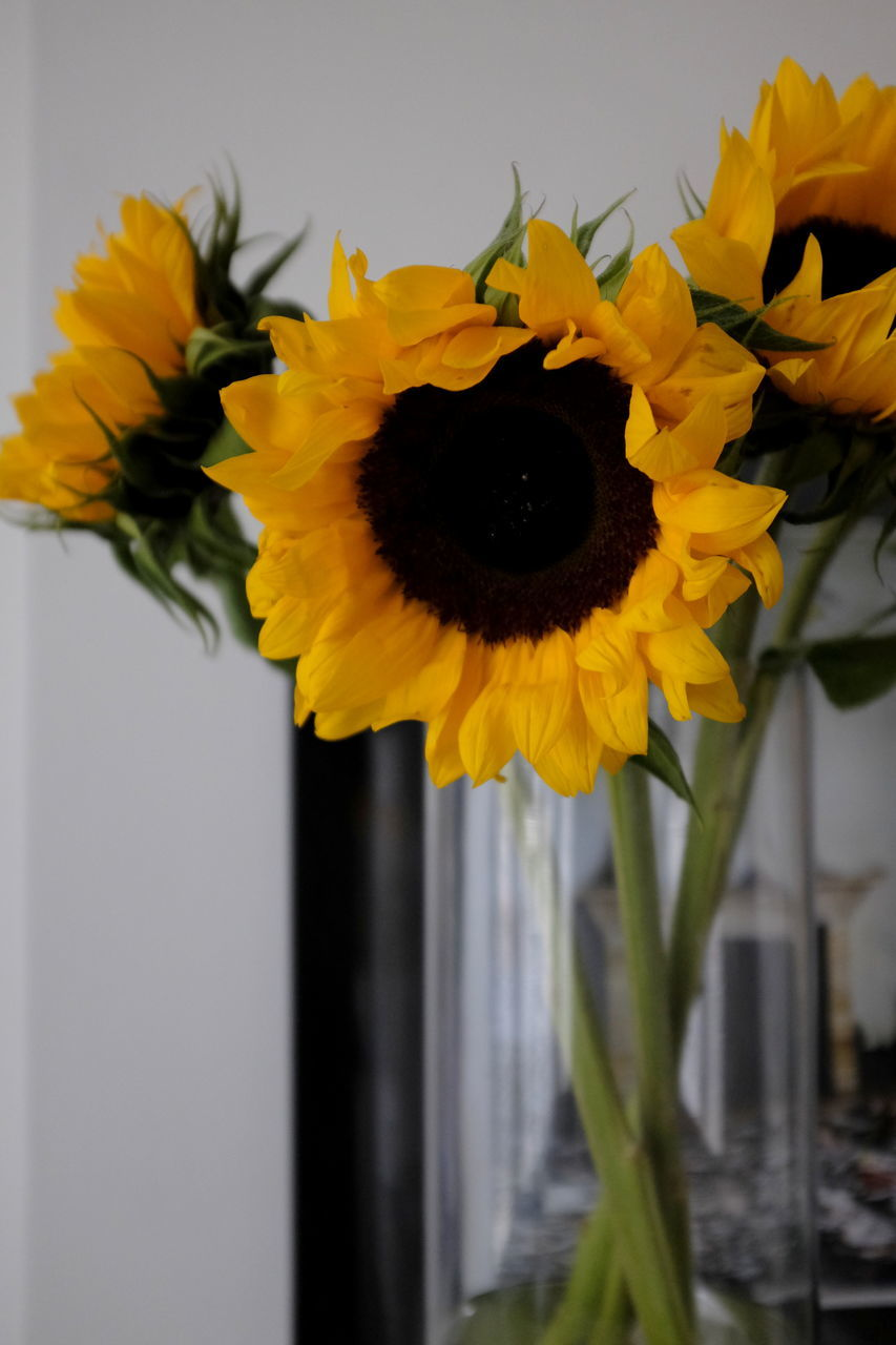 flower, fragility, yellow, beauty in nature, nature, freshness, petal, flower head, vase, plant, no people, outdoors, day, sunflower, growth, close-up, blooming, sky