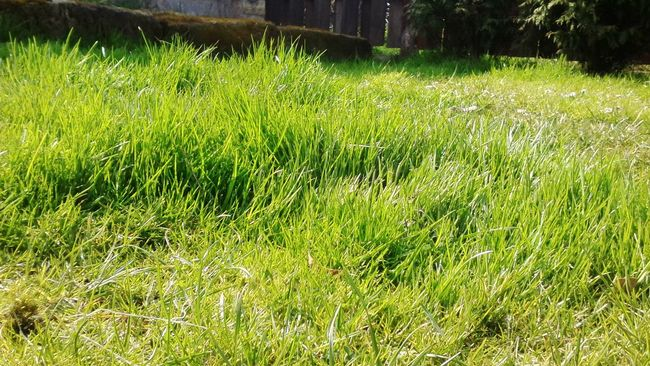 Grass Green Sunny Day