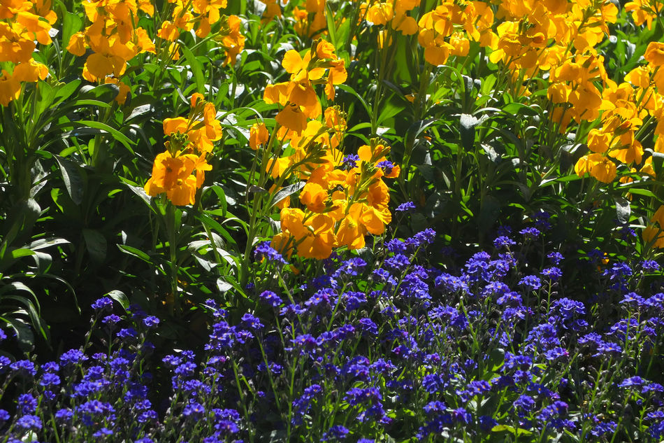 Bath Beauty In Nature Blue Flowers Contrast Contrasting Colors EyeEmNewHere Flower Bed Flowers Many Flowers Nature Plants Plants And Flowers Purple Flowers Urban Landscape Yellow Flowers