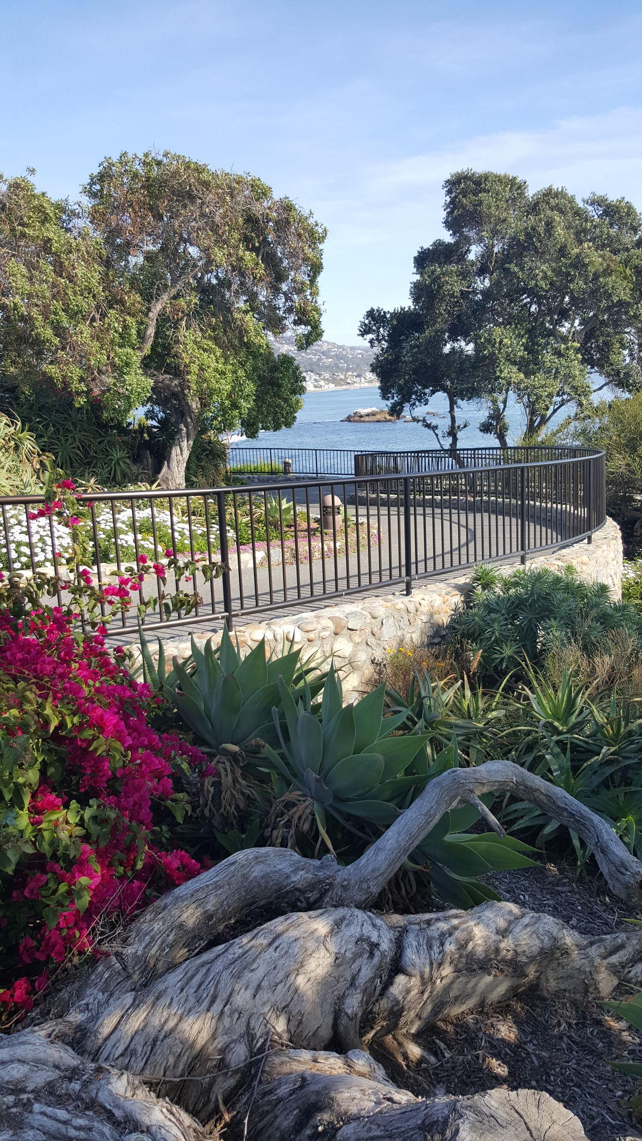 Heislerpark Laguna Beach Beautiful Day Flowers Ocean