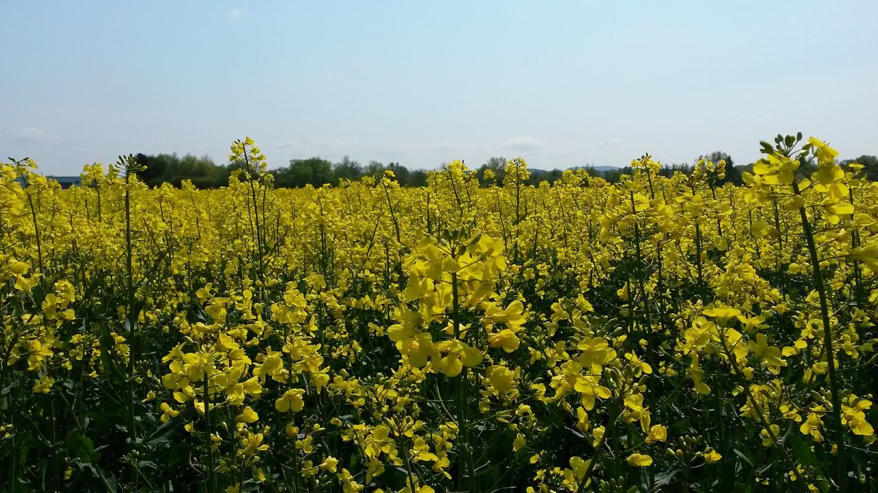 Scenic View Of Crop In Field