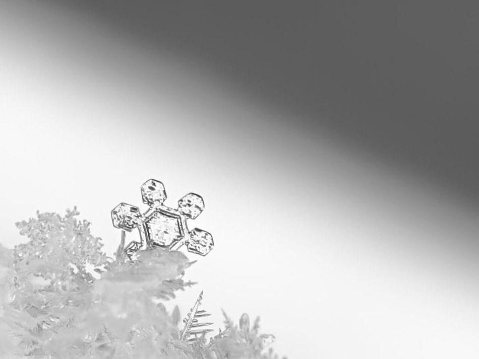 Nature Macro Snowflake Profile View Contrast White White On White Angle Diagonal Melting
