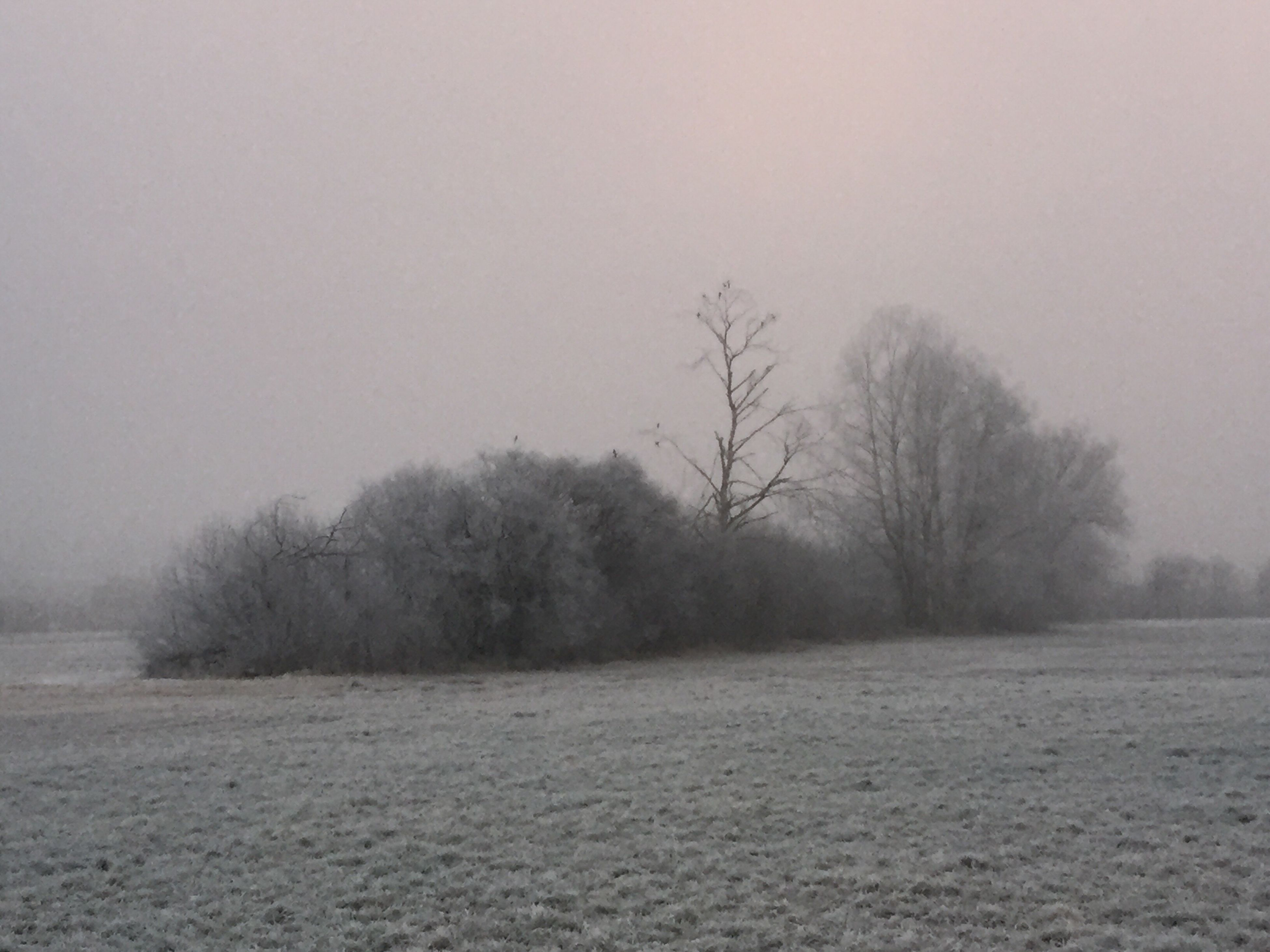 tree, tranquility, tranquil scene, bare tree, fog, landscape, scenics, foggy, nature, beauty in nature, weather, field, sky, copy space, non-urban scene, branch, outdoors, remote, no people