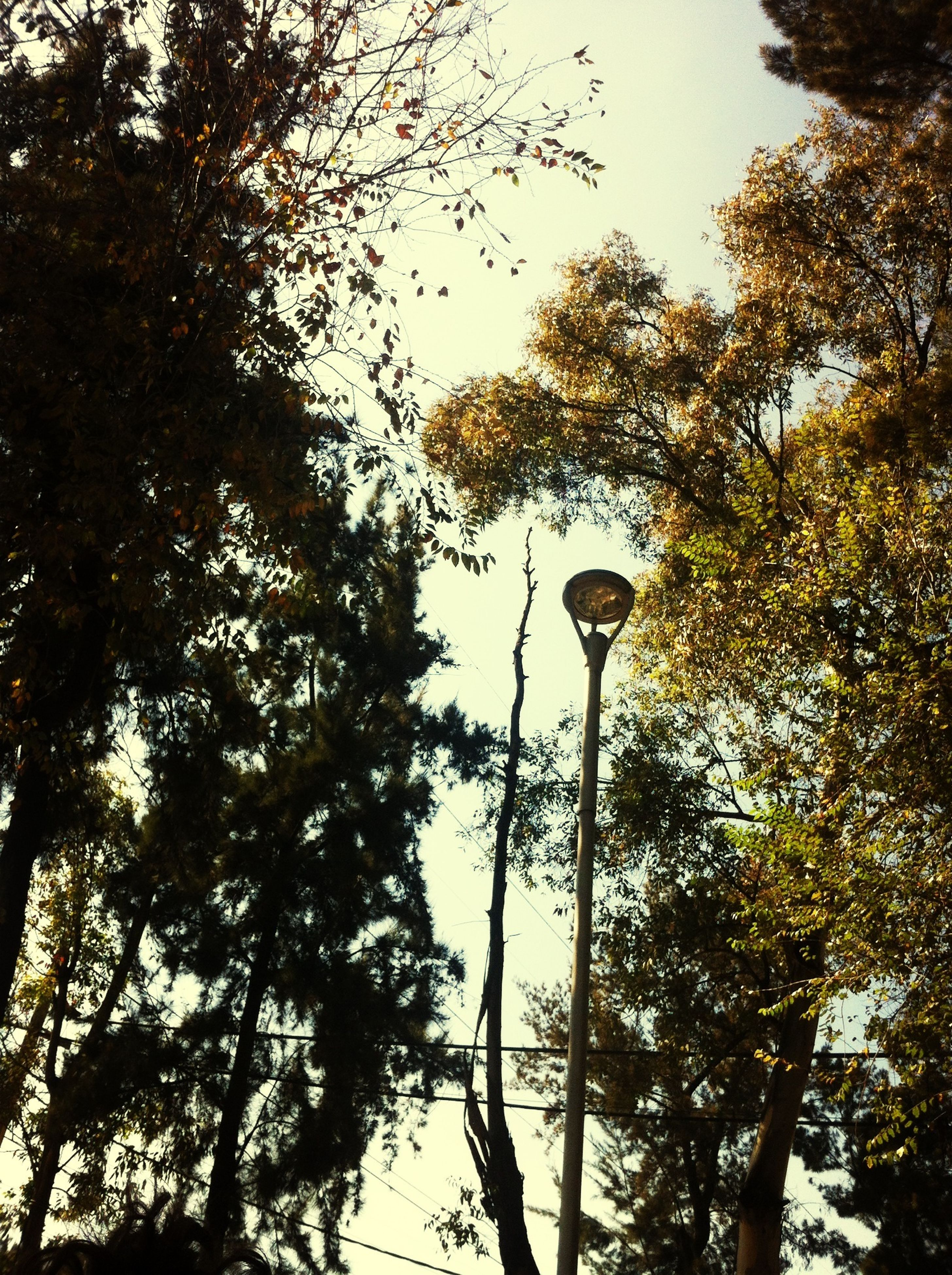 tree, low angle view, street light, branch, lighting equipment, growth, clear sky, sky, nature, tall - high, outdoors, day, no people, tree trunk, lamp post, pole, tranquility, bird, high section, beauty in nature