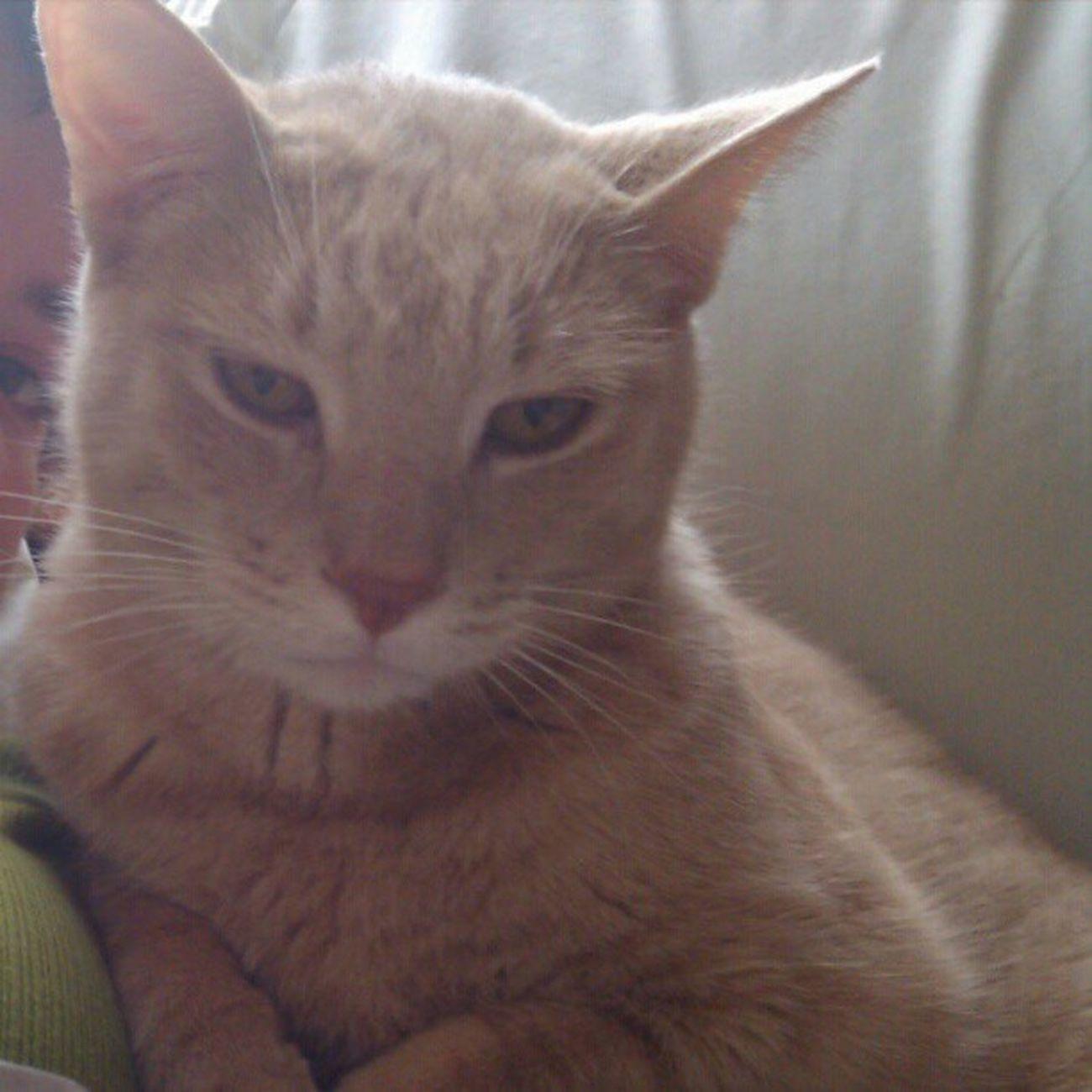 Do i look amused to you? Meow Snugglebuddy
