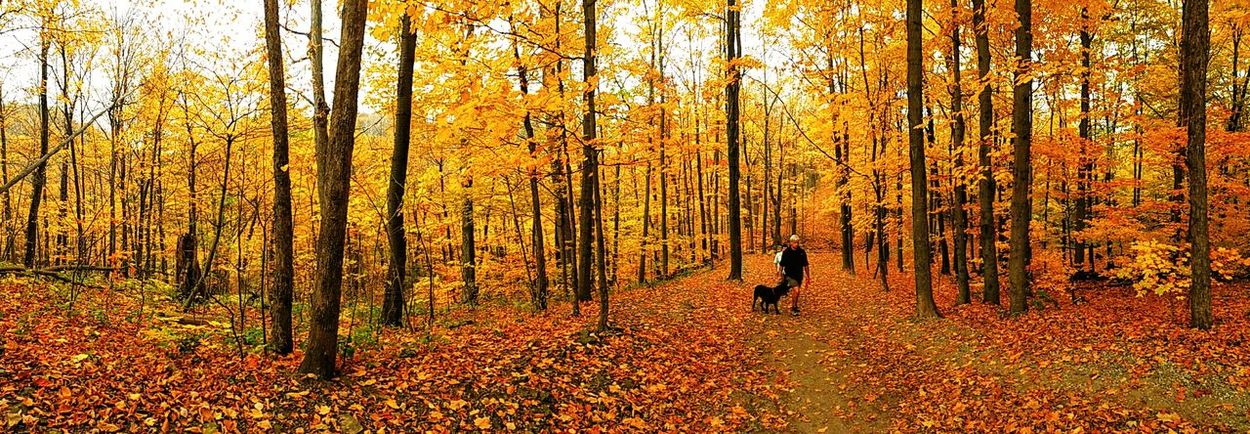 Tree Forest Nature Beauty In Nature Autumn Landscape Real People Outdoors Autmncolors Tranquility Peace Dog Walking & Happy Snapping.!! Dog Walking Nature Path