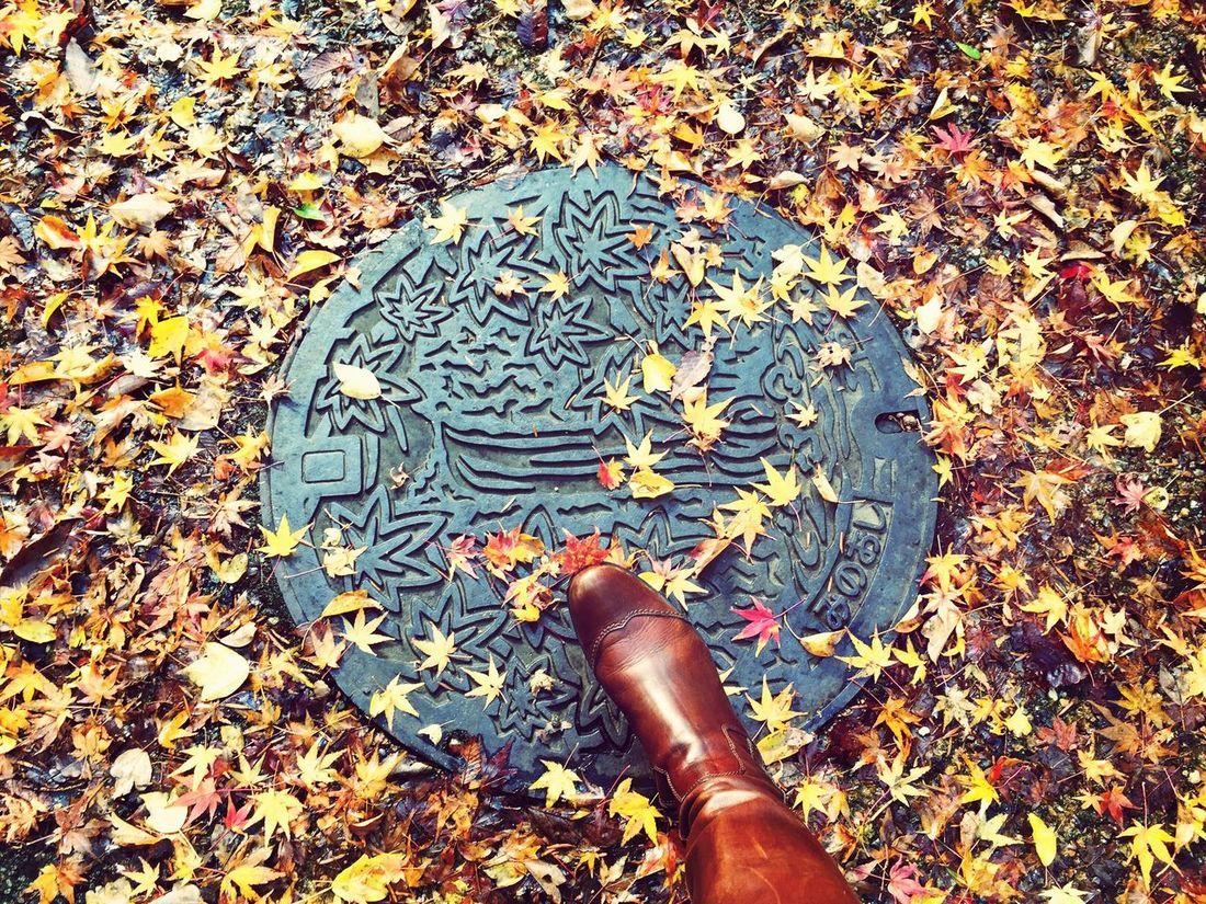 Autumn Colors Autumn Leaves Street Art Yellow Lookingdown