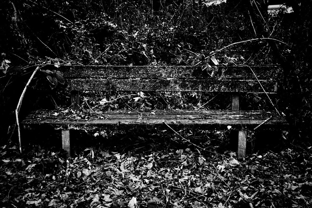 No People Outdoors Day Nature Benches Abandoned Places Lost Places Old Weathered EyeEm Best Shots Black And White High Contrast Taking Photos First Eyeem Photo Nature TakeoverContrast EyeEm Eeyem Photography Fine Art Photography Fine Art Exceptional Photographs