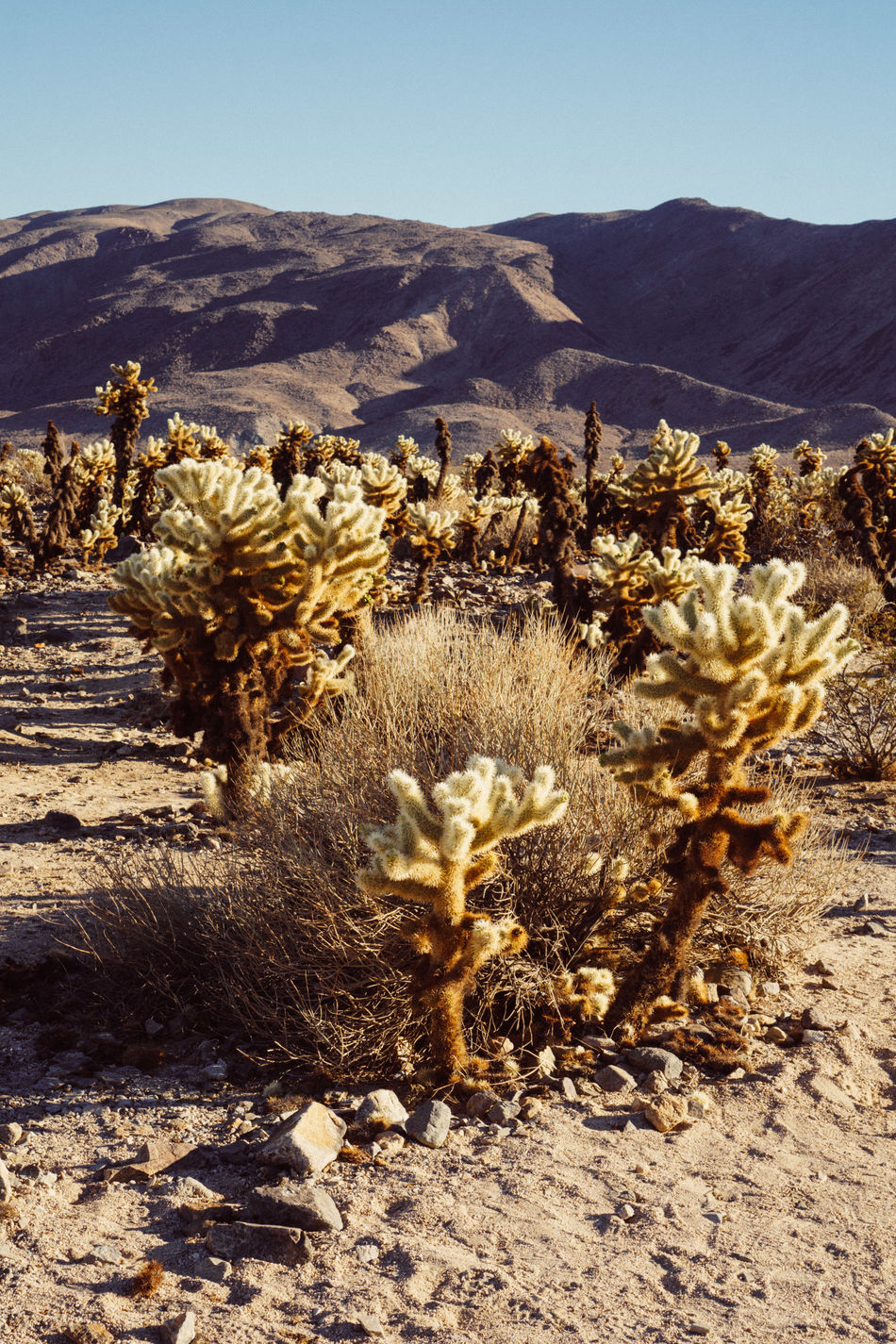 Arid Climate Beauty In Nature Cactus Day Growth Landscape Mountain Mountain Range Nature No People Outdoors Plant Scenics Sky Sunlight Tranquil Scene Tranquility Wilderness Area