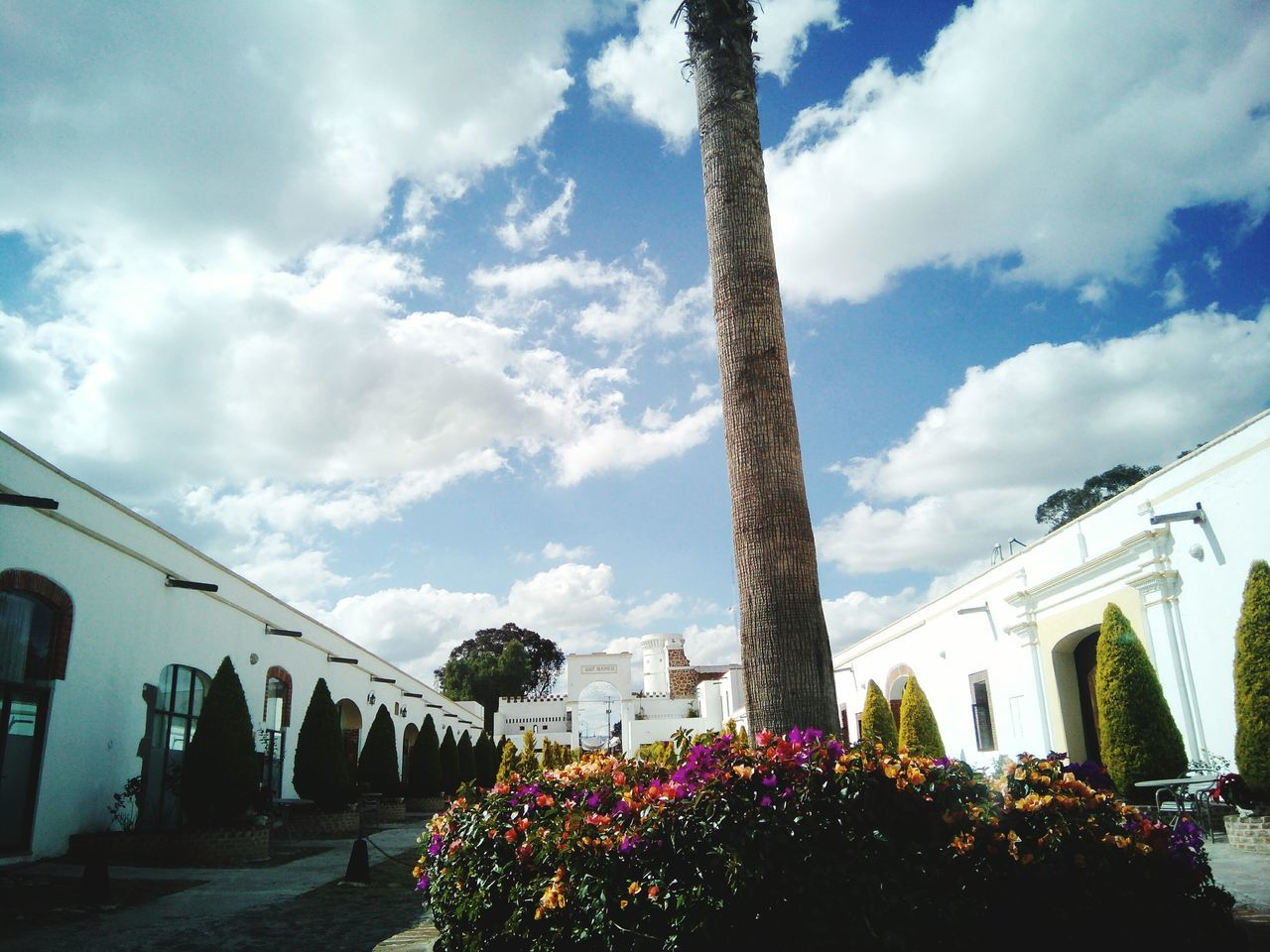 architecture, sky, built structure, architectural column, cloud - sky, outdoors, flower, no people, day, nature