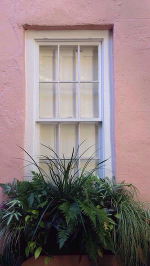 Building Exterior Built Structure Window Architecture Plant House Outdoors No People Day Growth Window Box Residential Building Nature