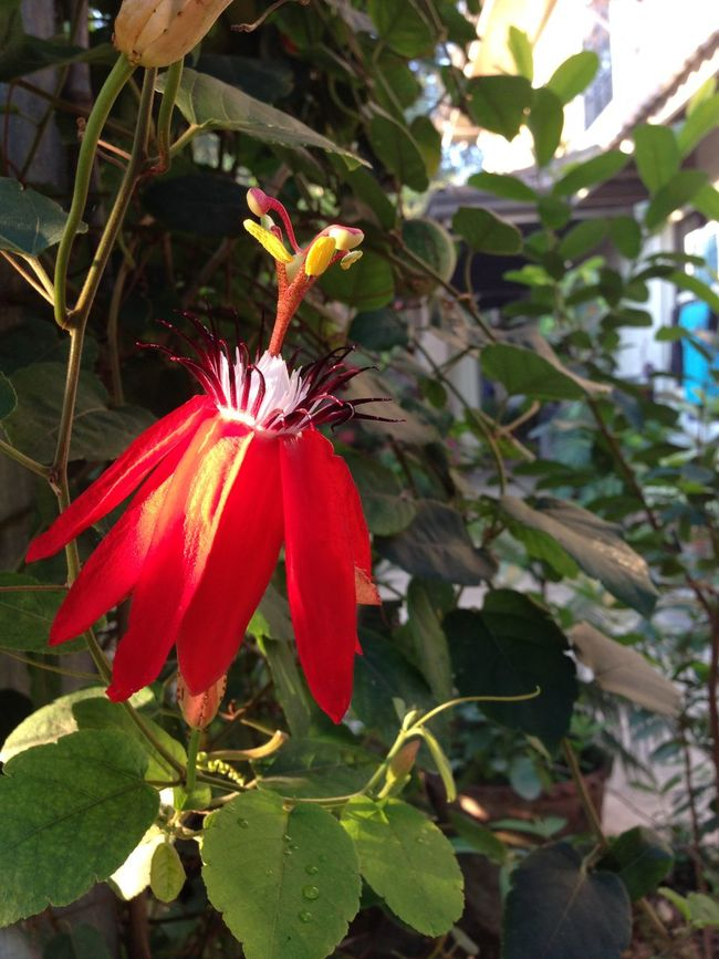 Nature a dancing flower..