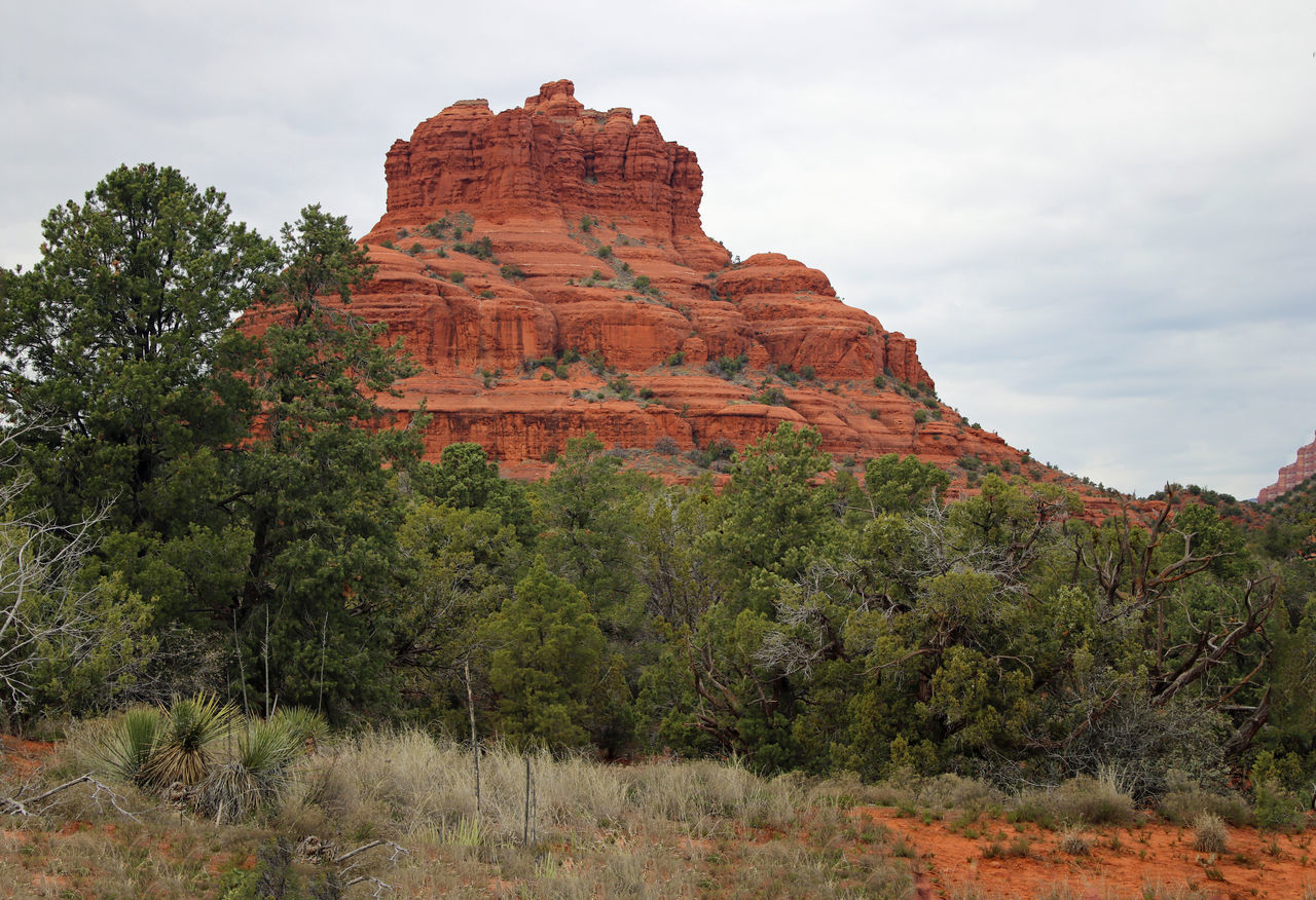 Red Rocks Beauty In Nature Cloud - Sky Day Geology Nature No People Outdoors Rock Face Sedona, Arizona Tourism Travel Travel Destinations Tree Tree Area Vacations