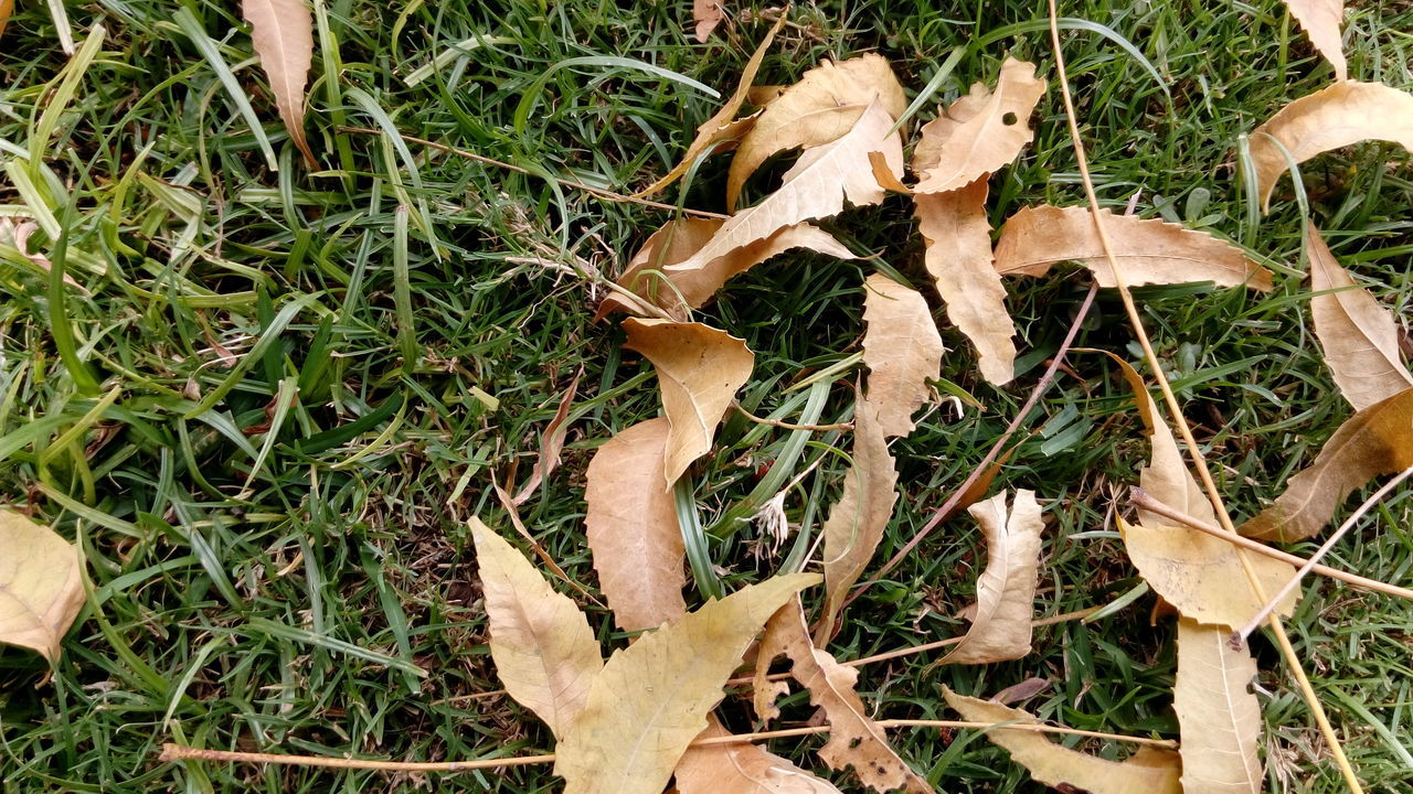 CLOSE-UP OF LEAVES ON FIELD