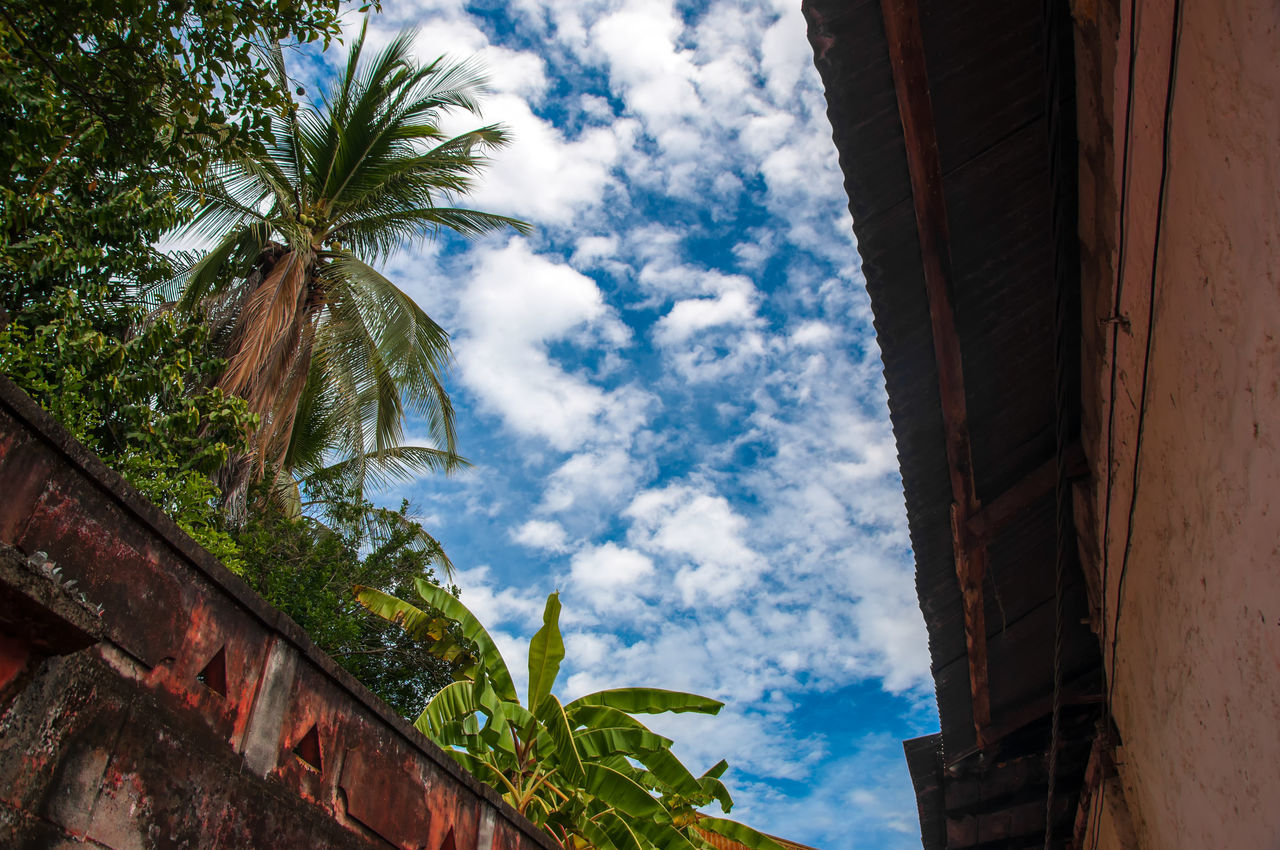A blue sky and palm trees in the old town of Honda, Colombia America Beautiful Beauty Blue Bright Colombia Colonial Colorful Honda Nature Old Palm Tree Plant Scenic Sky South Summer Sunlight Sunny Tolima Town Travel Tree Tropic Tropical
