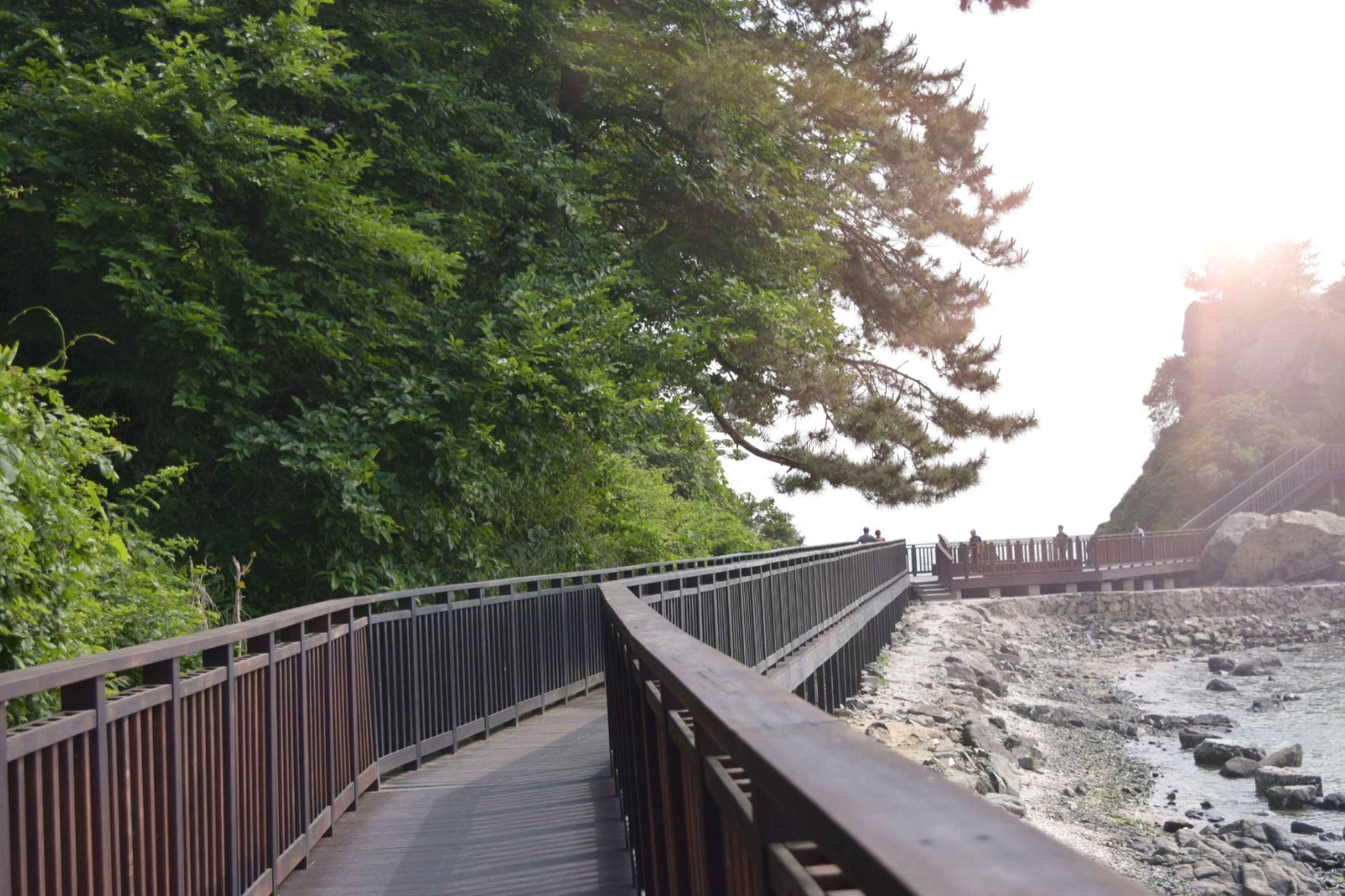railing, tree, bridge - man made structure, day, footbridge, outdoors, built structure, nature, water, no people, architecture, beauty in nature, sky