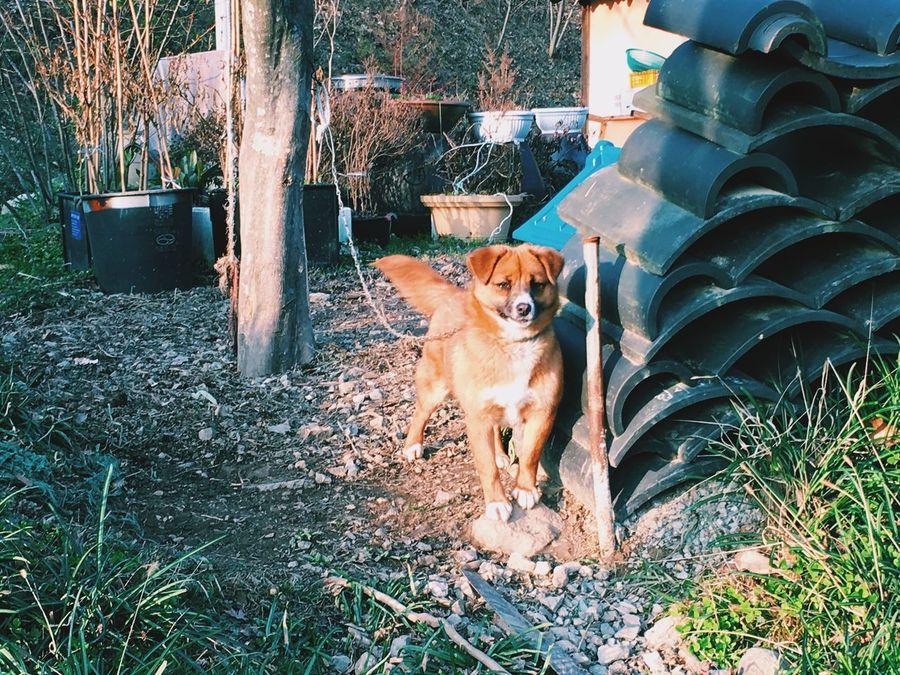 HelloFromTheOtherSide Countryside Dog Naturelovers