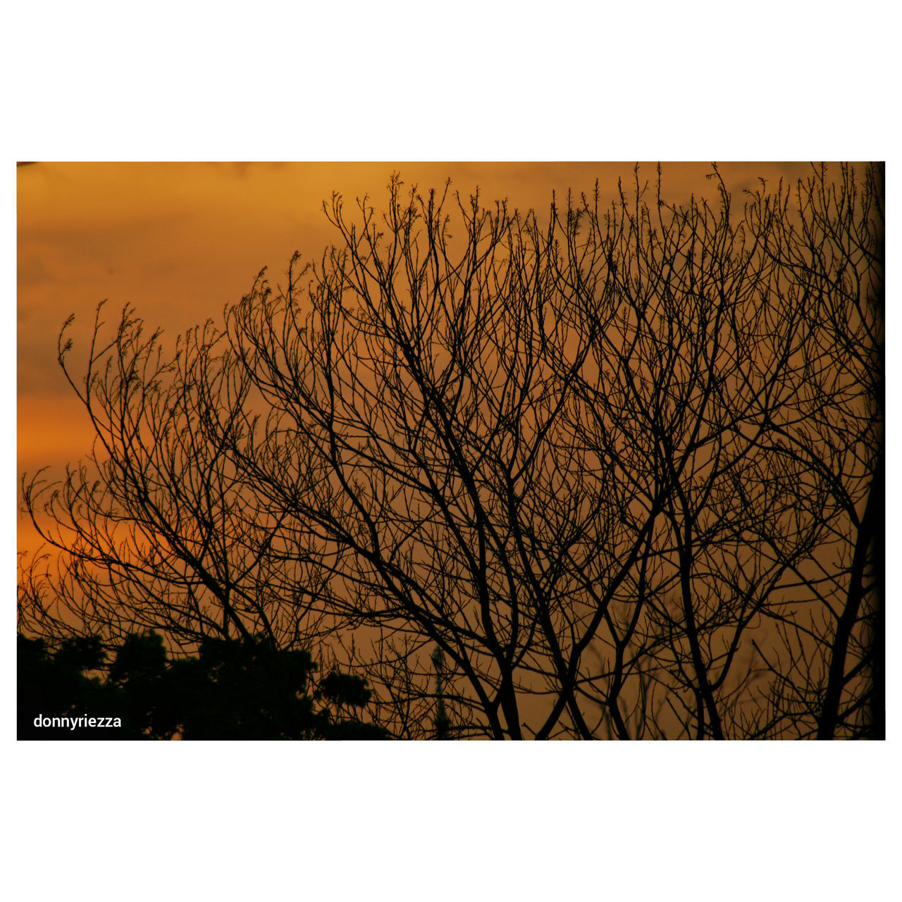 First post First Eyeem Photo Sonyphotography Alpha700 Tamronlens 70-300mm Sunset_collection Sunset Sunsetporn sunset #sun #clouds #skylovers #sky #nature #beautifulinnature #naturalbeauty photography landscape Sunset_captures Sunsetlovers Siluetes Tree Silhouette