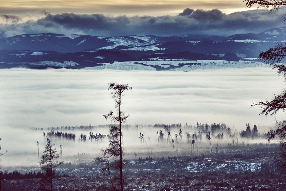 Landscapes With WhiteWall Winter Landscape Landscape Winter Winter Scenery Tatra Mountains Slovakia Snow Mountains Landscape Layers Layers Fog Snowfields Snow Mountain View Larches Larch Tree Larch