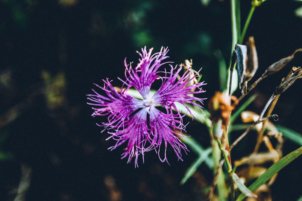 Abstract Beautiful Nature Beauty In Nature Blooming Close-up Day EyeEm Best Shots EyeEm Gallery EyeEm Nature Lover Fine Art Flower Flower Head Fragility Freshness Getting Inspired Growth Nature Naturelovers No People Outdoors Plant Purple Taking Photos Hello World Check This Out