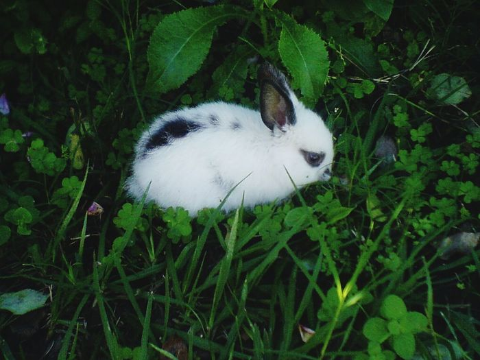 One Animal Domestic Animals Nature No People Plant Rabbit White Color Green Color Beauty In Nature Lovely EyeEm Gallery