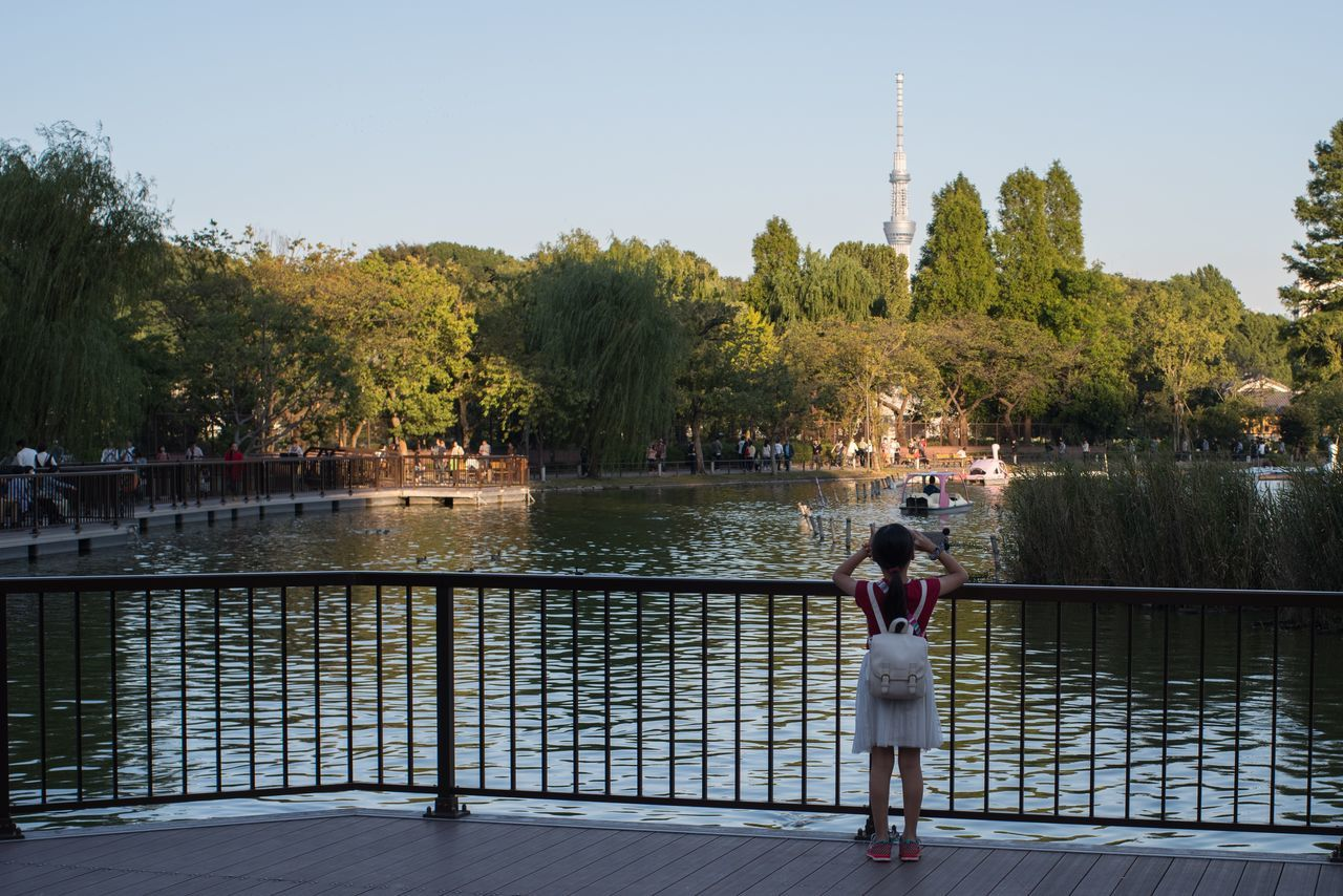 Beautiful stock photos of straßenfotografie, water, tree, rear view, real people