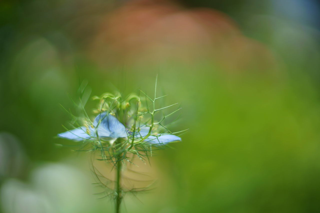 Beauty In Nature Close-up Day Flower Flower Head Fragility Freshness Growth Nature No People Outdoors Plant