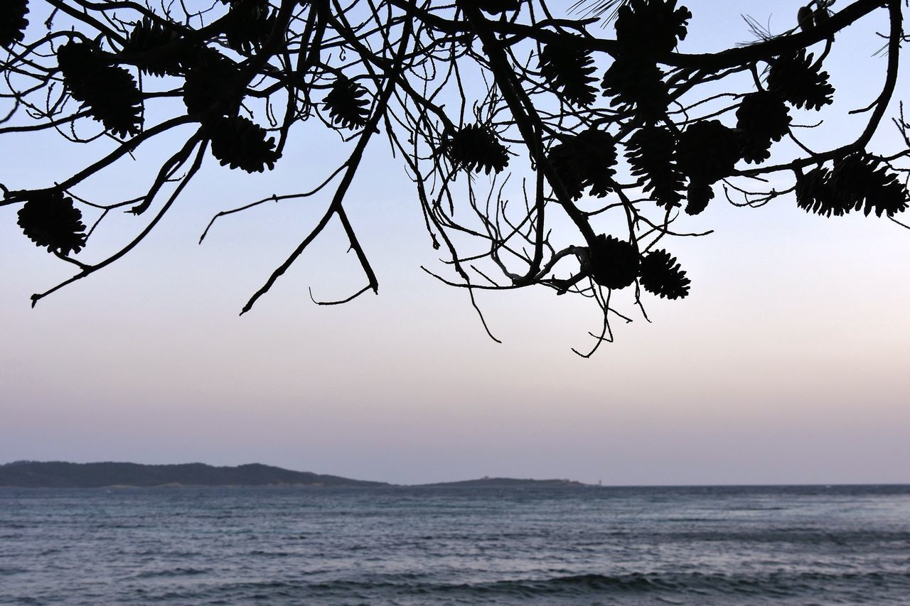 beauty in nature, nature, sea, silhouette, sunset, scenics, water, tranquil scene, tree, tranquility, outdoors, sky, no people, horizon over water, growth, branch, clear sky, day