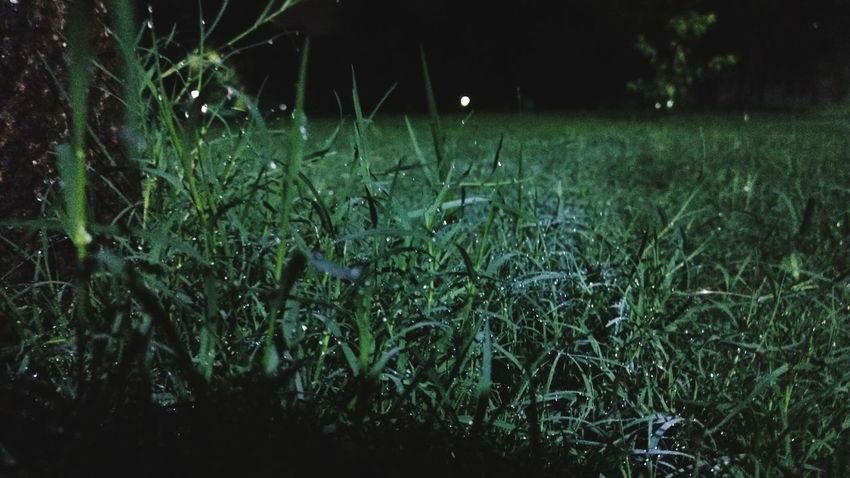 Grass Night Green Color Outdoors Beauty In Nature Close-up