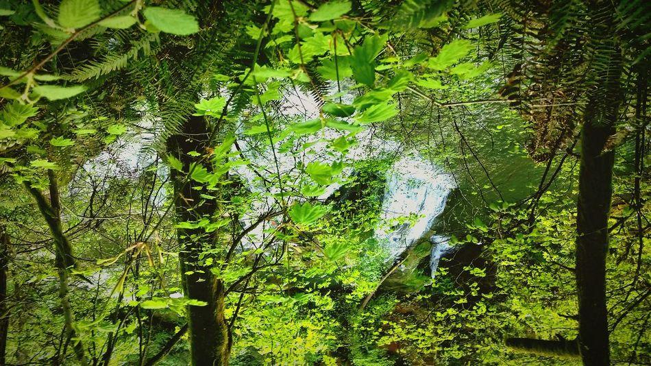 Secret Garden Hidden Gems  Peacefulness Meditation Deep Thoughts Falling In Love EyeEm Nature Lover Secret Places Serenity