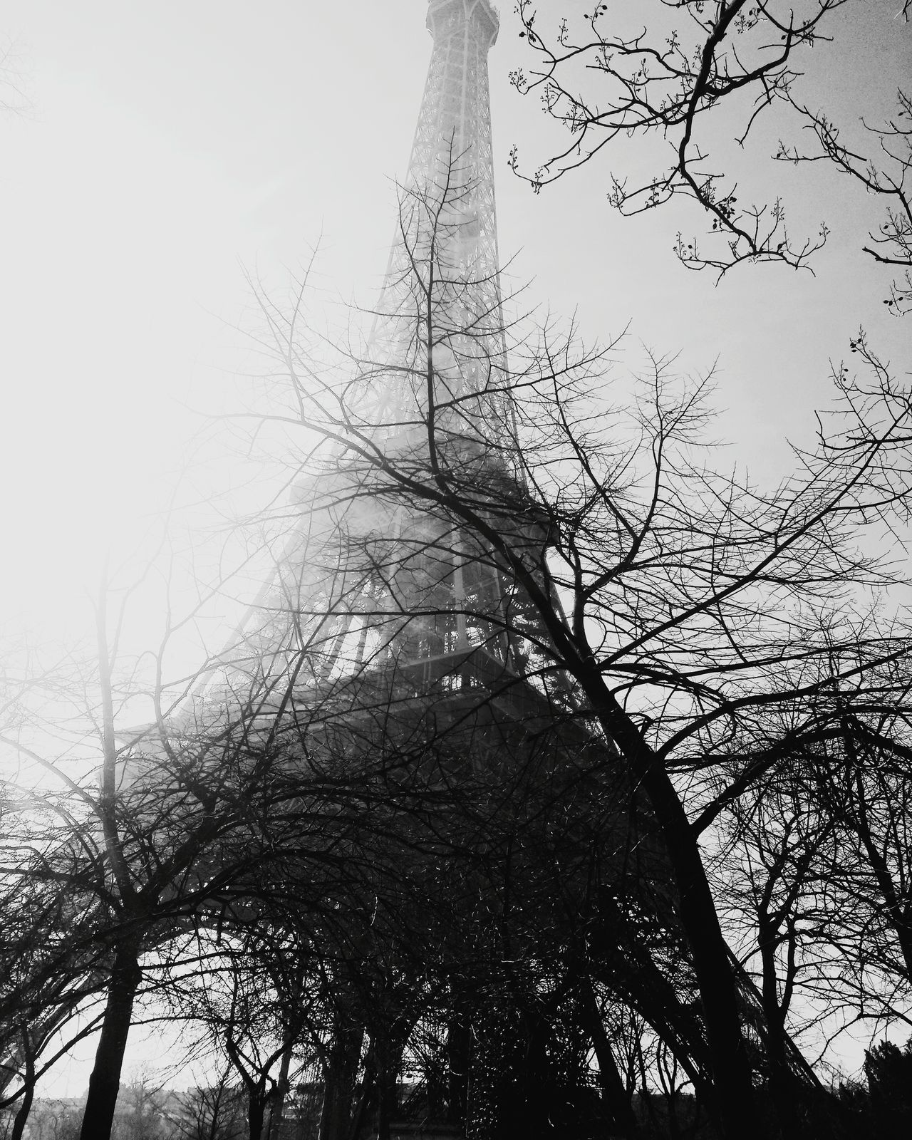 Sky Day France Branch Eiffel Tower Low Angle View Paris Travel Destinations Outdoors Cloud - Sky Tree Built Structure Building Exterior Art Architecture Historical Building Travel Travel Photography Tourism Tourist Attraction  Black And White Black & White