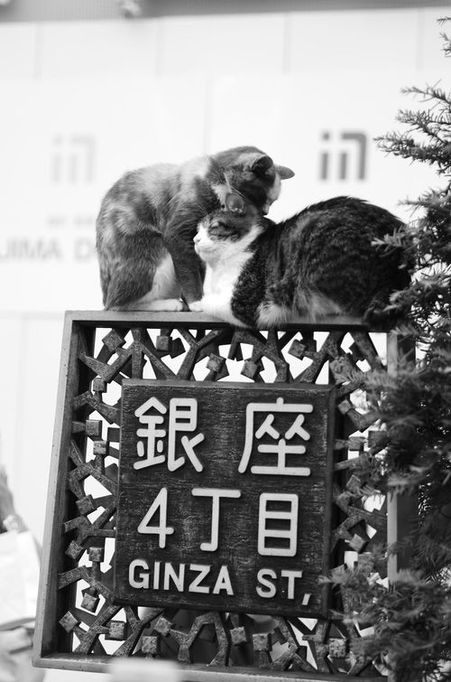 EMCT01 EyeEm Bnw Bnw_collection EyeEm Best Edits Sundayshooter EyeEm Best Shots Cats