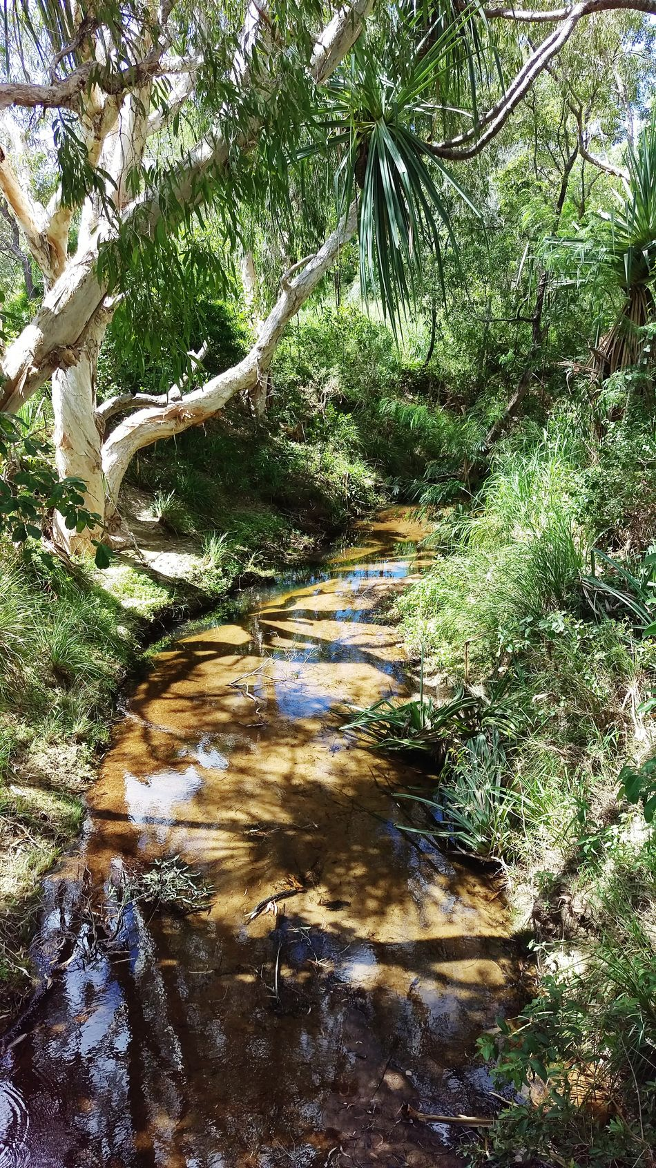 Country Stream Creek Nature Day Outdoors Water Tranquility Tree No People Tranquil Scene Growth Reflection Beauty In Nature Forest Sunlight Scenics