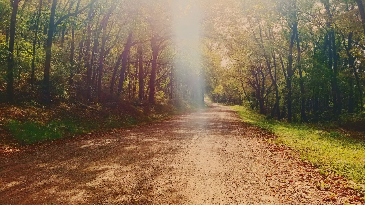 Jesus don't want me for a sunbeam The Way Forward Tree Road Country Road Countryside Forest Diminishing Perspective Transportation Tranquil Scene Vanishing Point Nature Non-urban Scene Scenics Growth Treelined Beauty In Nature Long Narrow Outdoors Samsung Galaxy S7 Edge Season  Autumn Change TakeoverContrast