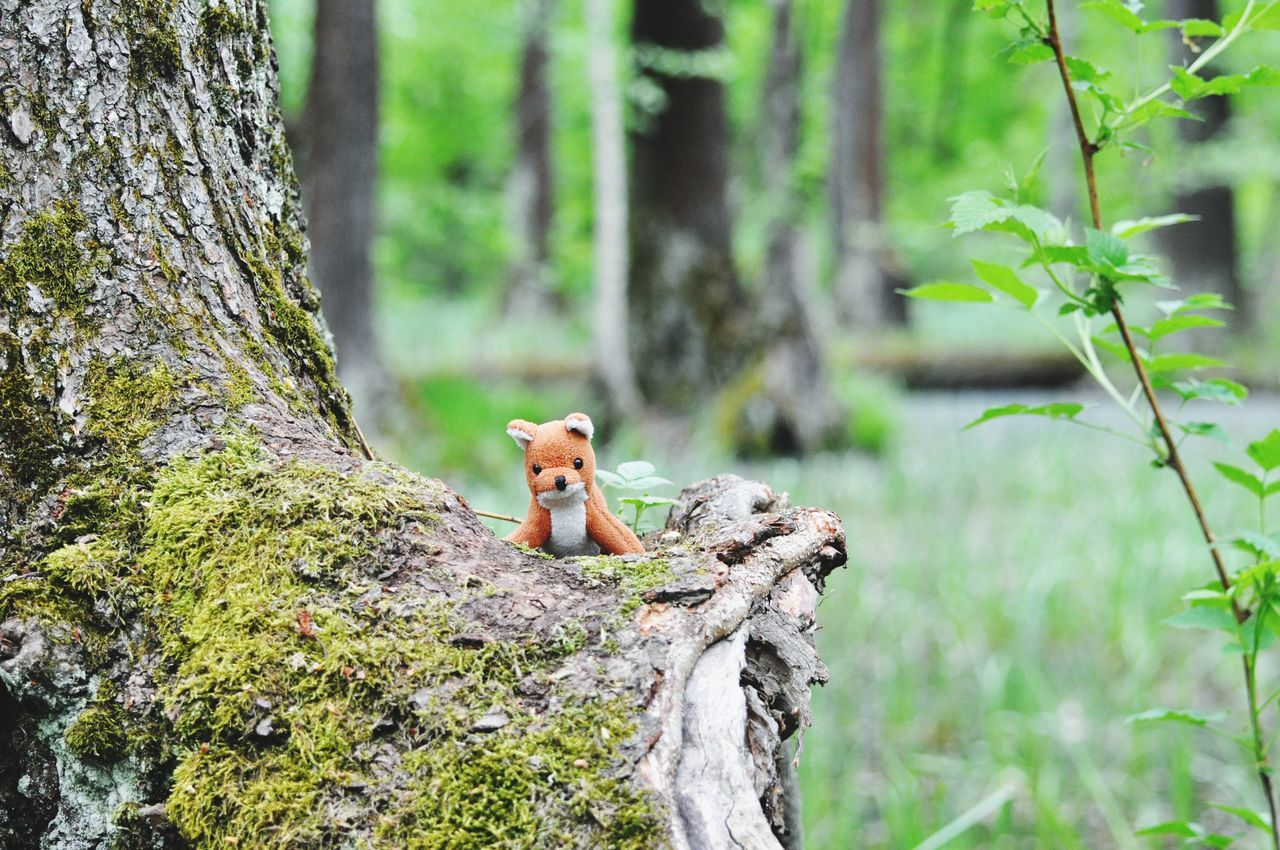 tree trunk, tree, nature, one animal, no people, day, squirrel, animal themes, growth, outdoors, mammal, animals in the wild