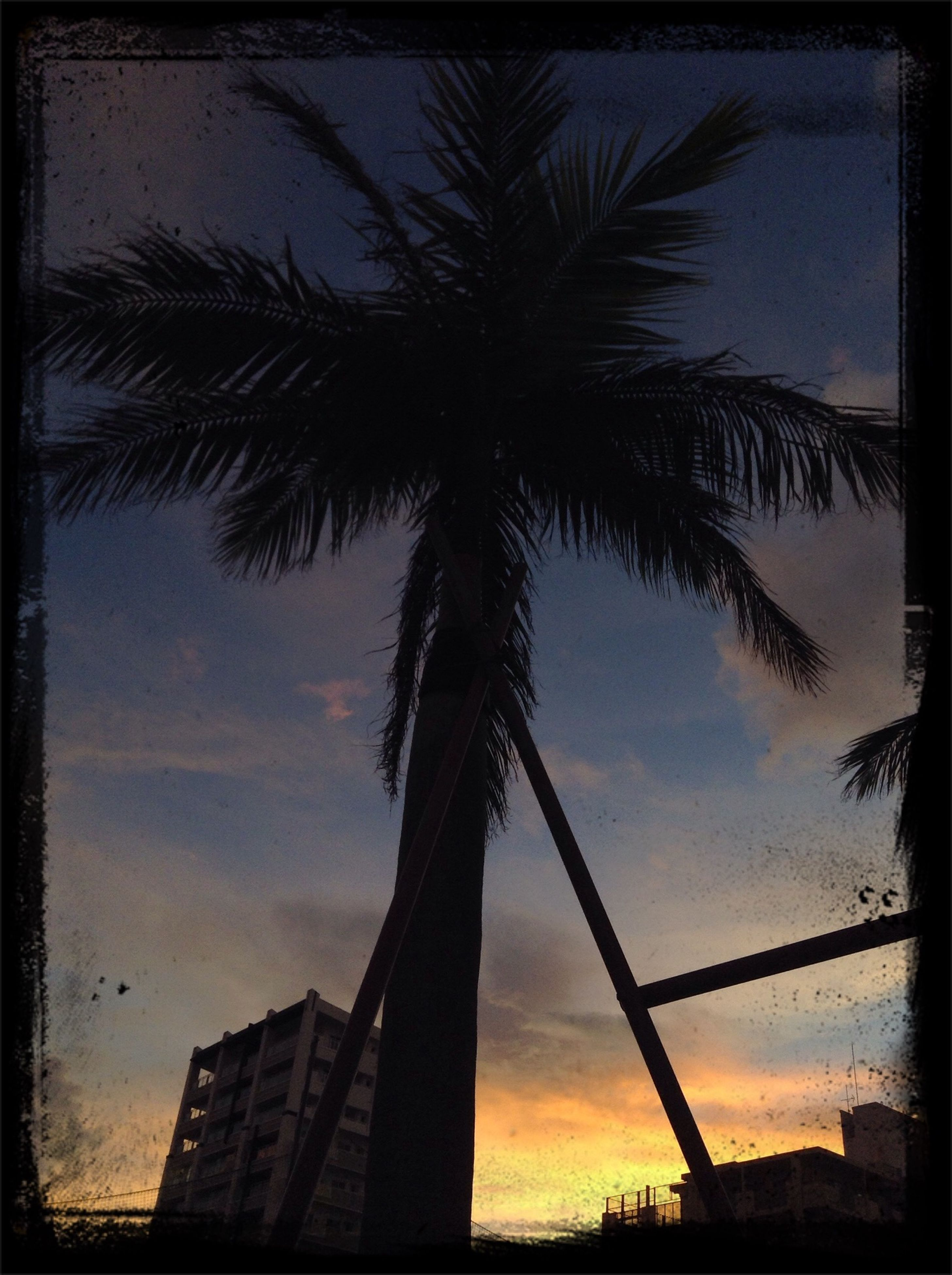 palm tree, silhouette, low angle view, sky, sunset, tree, built structure, transfer print, architecture, tall - high, building exterior, auto post production filter, tree trunk, cloud - sky, growth, cloud, nature, dusk, outdoors, outline