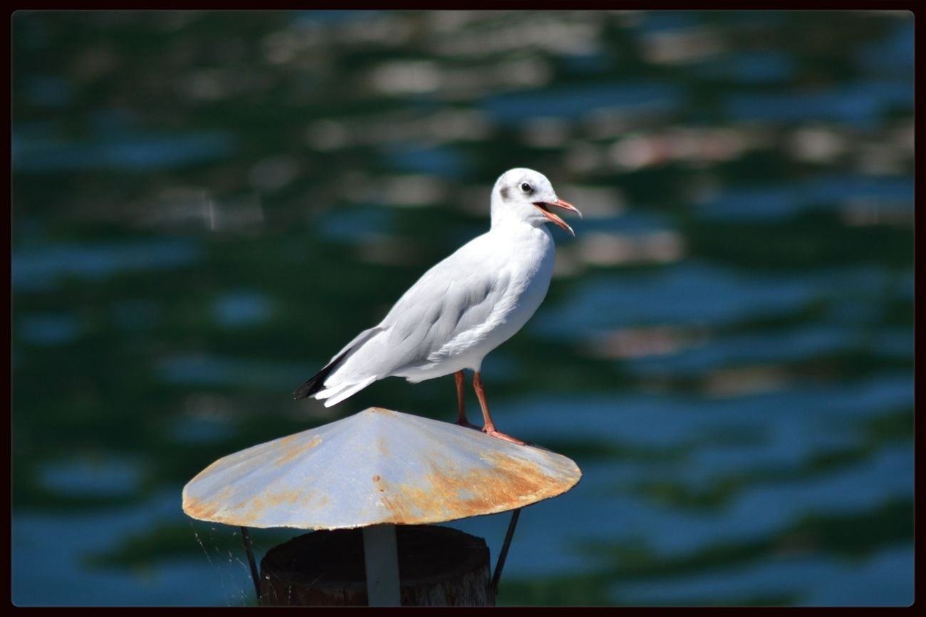 why are you staring at me? EyeEm Birds Lago Maggiore