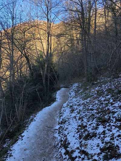 Let it go Rupit Y Pruït Bare Tree Tree Nature River Winter Beauty In Nature Snow