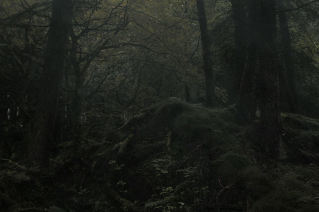 Dark Green Dark Forest Spooky Atmosphere Spooky Old Tree Camoflauge Early Morning Taking Photos Check This Out Forest Undergrowth Lancashire British Trees