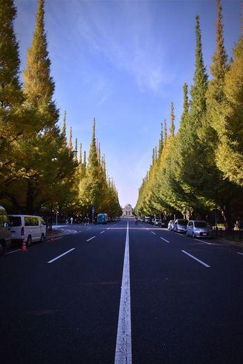 Road Street Japanese Culture Cultures Nikonphotography EyeEm Best Shots Shibuya Nikontop
