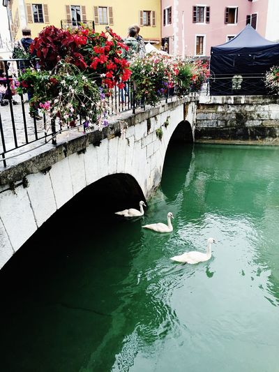 France🇫🇷 Annecy, France Annecy Annecylake Annecy Lake Annecy France  Annecy Le Vieux Annecynature Annecylevieux Annecy Lack Annecytravel Flower Water Nature Architecture Beauty In Nature Freshness Travelover Travel Destinations Visiting Enjoying The Moment Europe Travelingram Traveling Photography Traveller